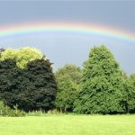 trees and rainbow image