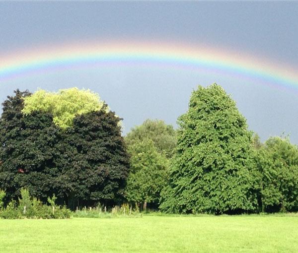 trees and rainbow image